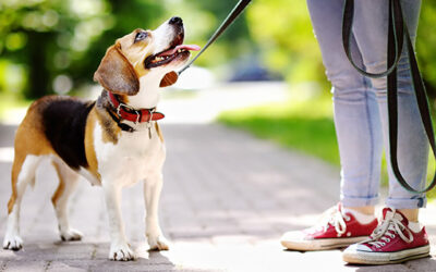 Your Leadership & Guidance Helps Your Dog